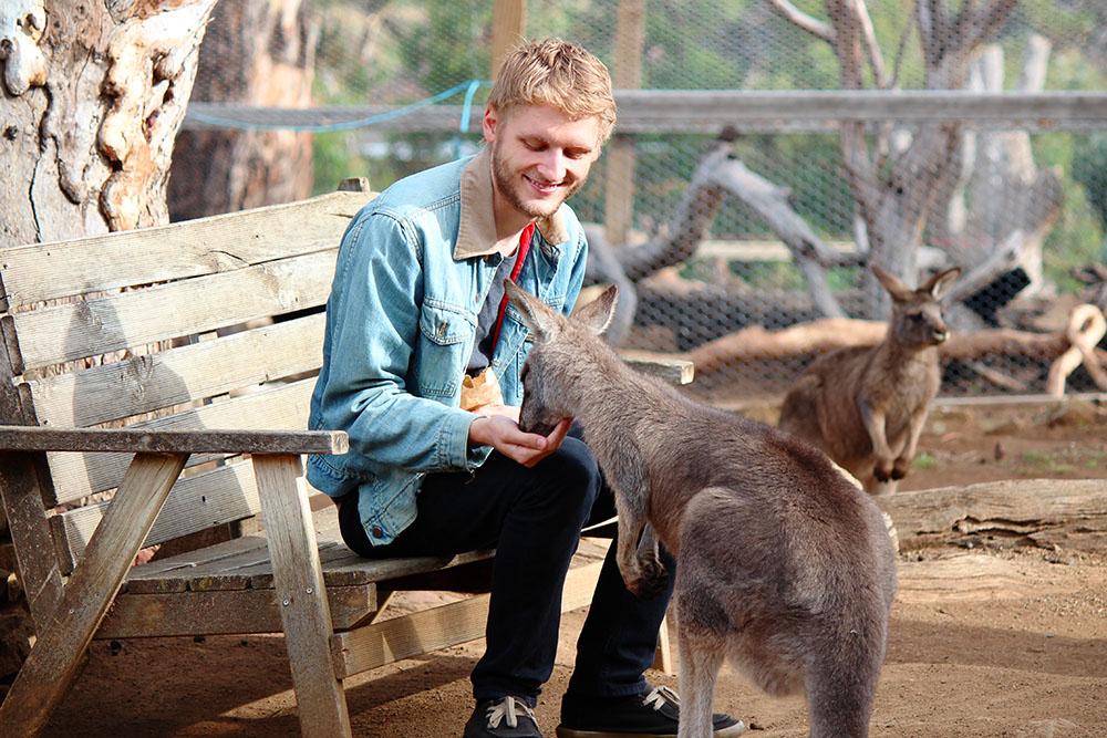 Kangaroo at Bonorong Wildlife Sanctuary, Tasmania
