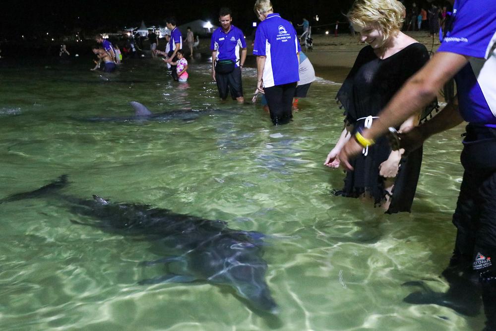 Tangalooma wild dolphin feeding