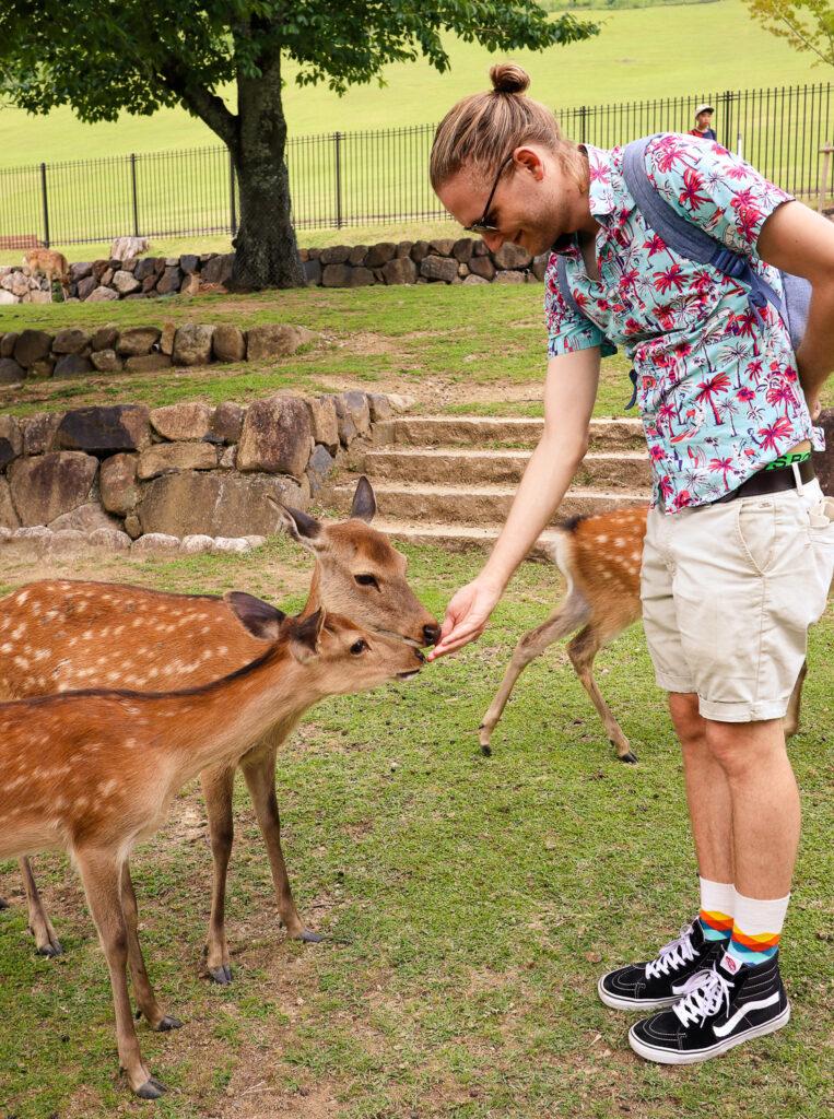 Feeding the deer in Nara Park, Japan